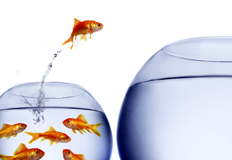 Gold fish jumping from one tank to another representing taking the leap into cryptocurrency